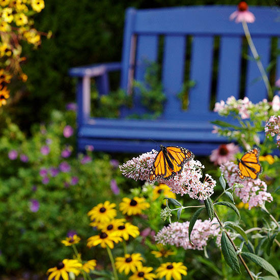 Colourful image of a butterfly landing on flowers