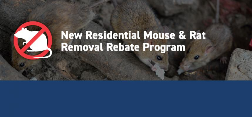 web banner promoting the mouse and rat rebate program showing a photograph of three rats