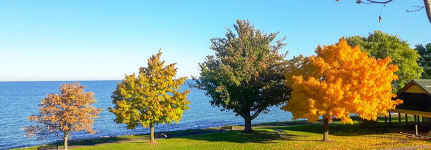 Charles Daley Park in the Autumn