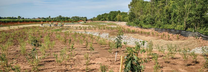 image of Konkle Creek Naturalization Project